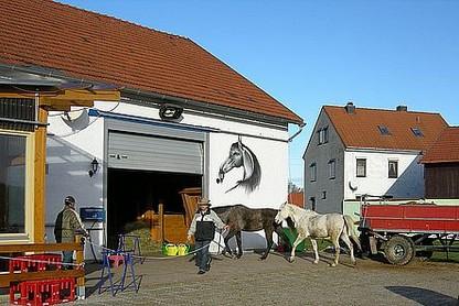 pferde betreuung die pferdepension kaata pferde in artgerechter haltung. Black Bedroom Furniture Sets. Home Design Ideas